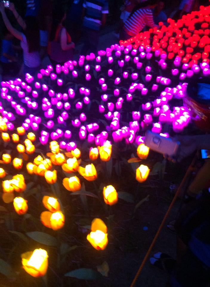 20,000 LED powered Roses is the newest Tourist attraction in Pilar Bohol